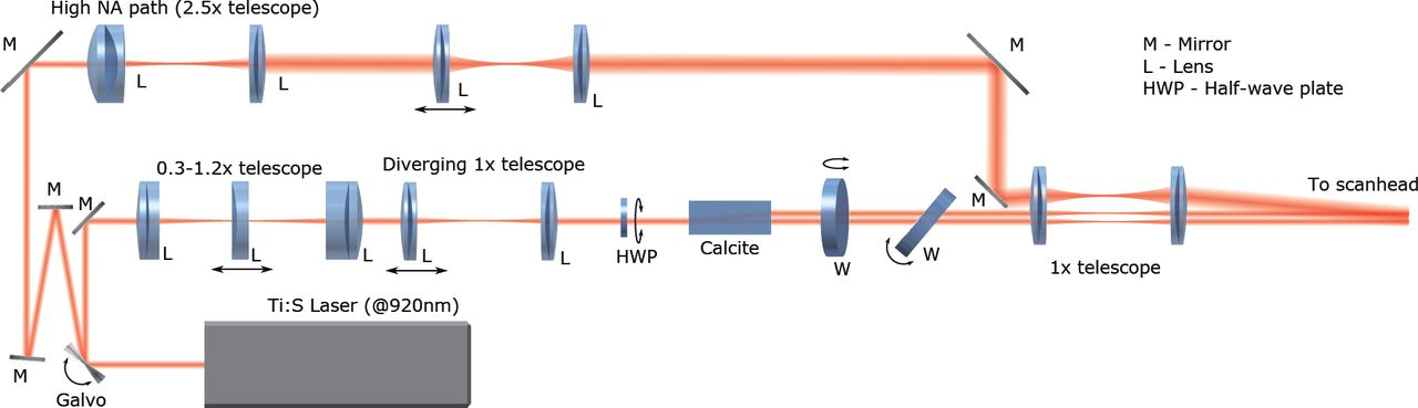 Volumetric Two-photon Imaging of Neurons Using Stereoscopy (vTwINS