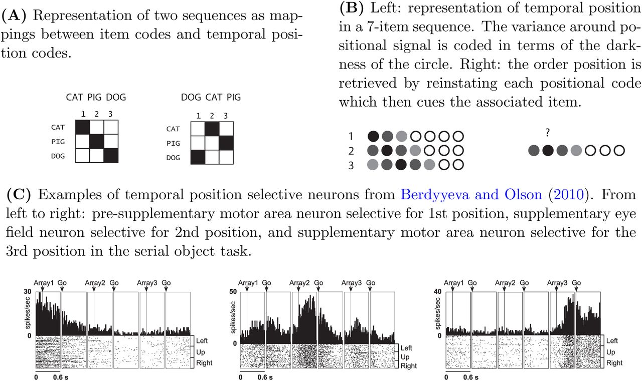 Reading positional codes with fMRI: Problems and solutions