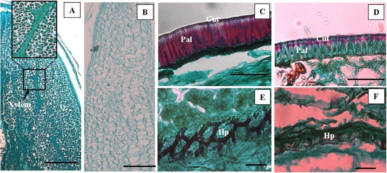 Reproductive biology of three Ziziphus species (Rhamnaceae