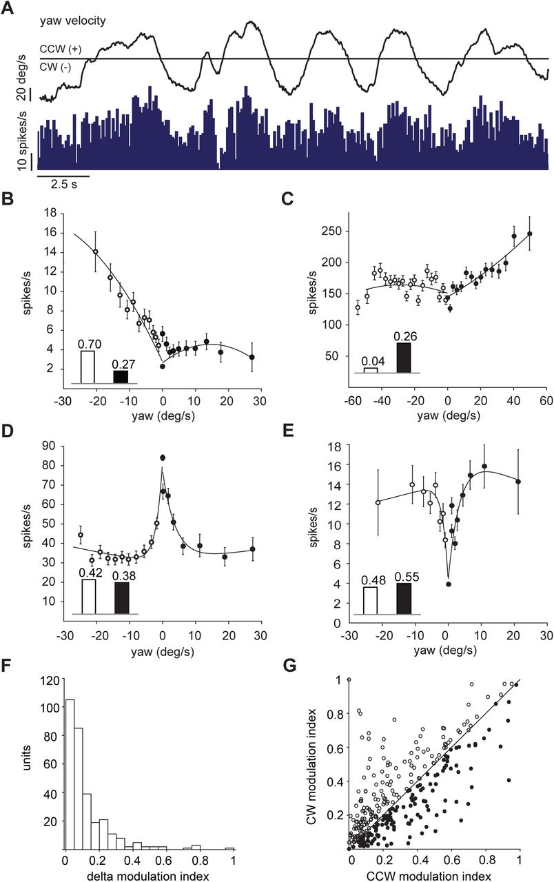Encoding of locomotion kinematics in the mouse cerebellum