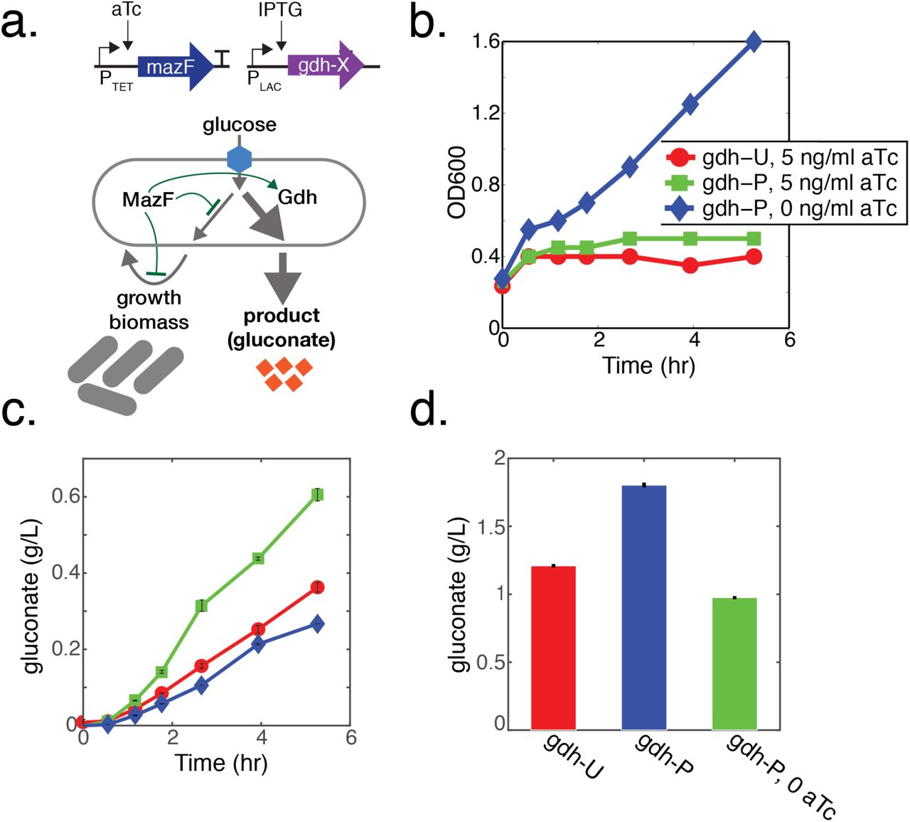 Programming mRNA decay to modulate synthetic circuit