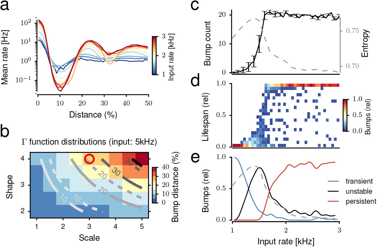 Activity Dynamics and Signal Representation in Striatal Network