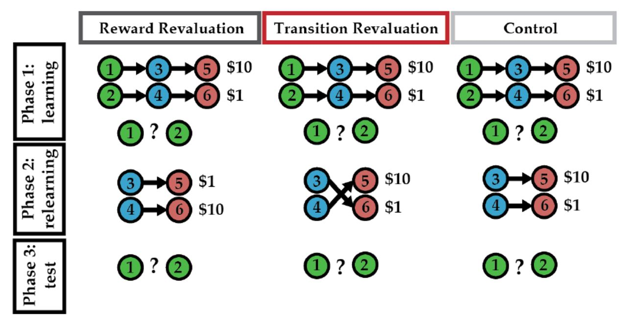 The successor representation in human reinforcement learning