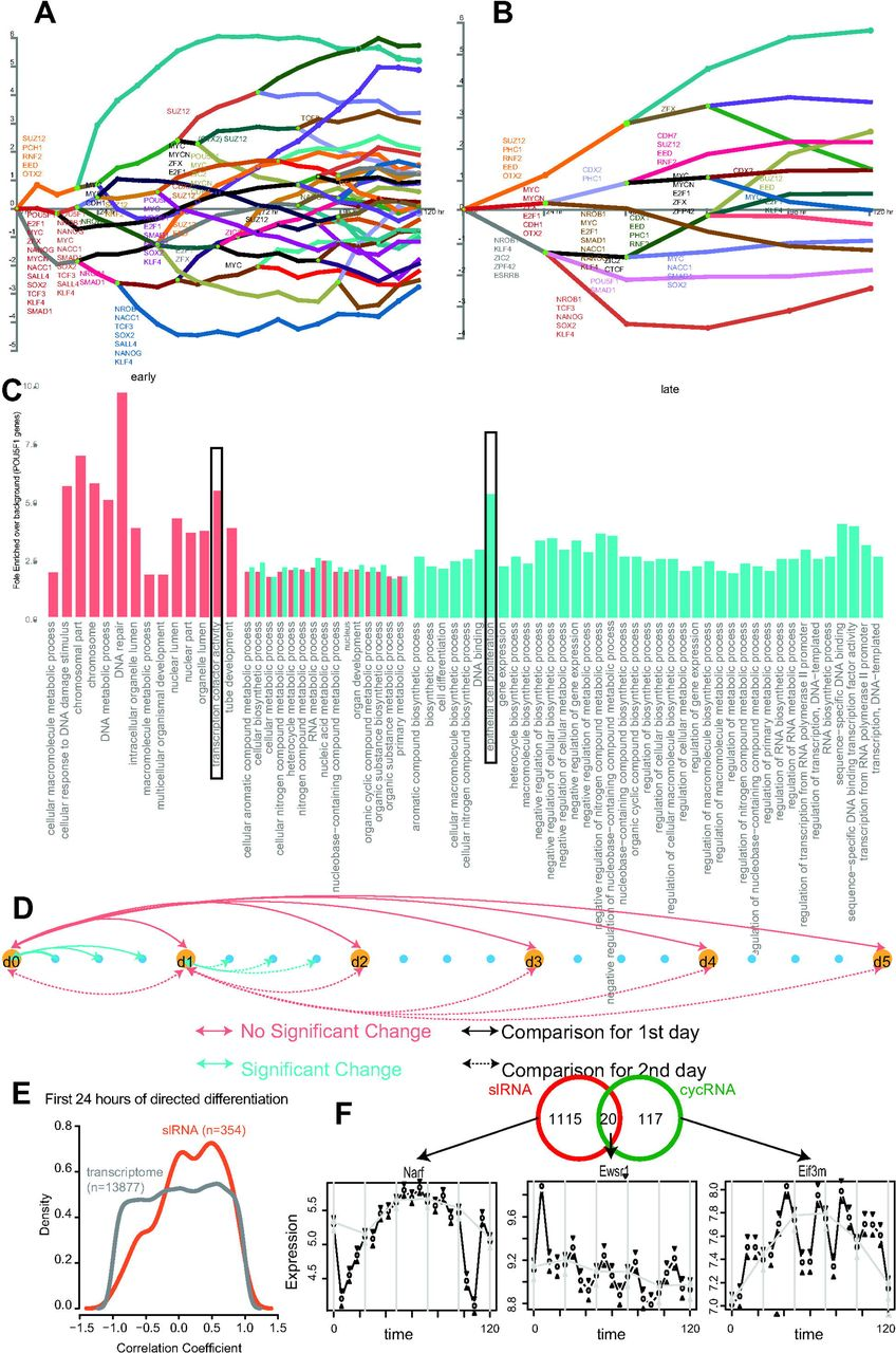 High temporal resolution of gene expression dynamics in developing on