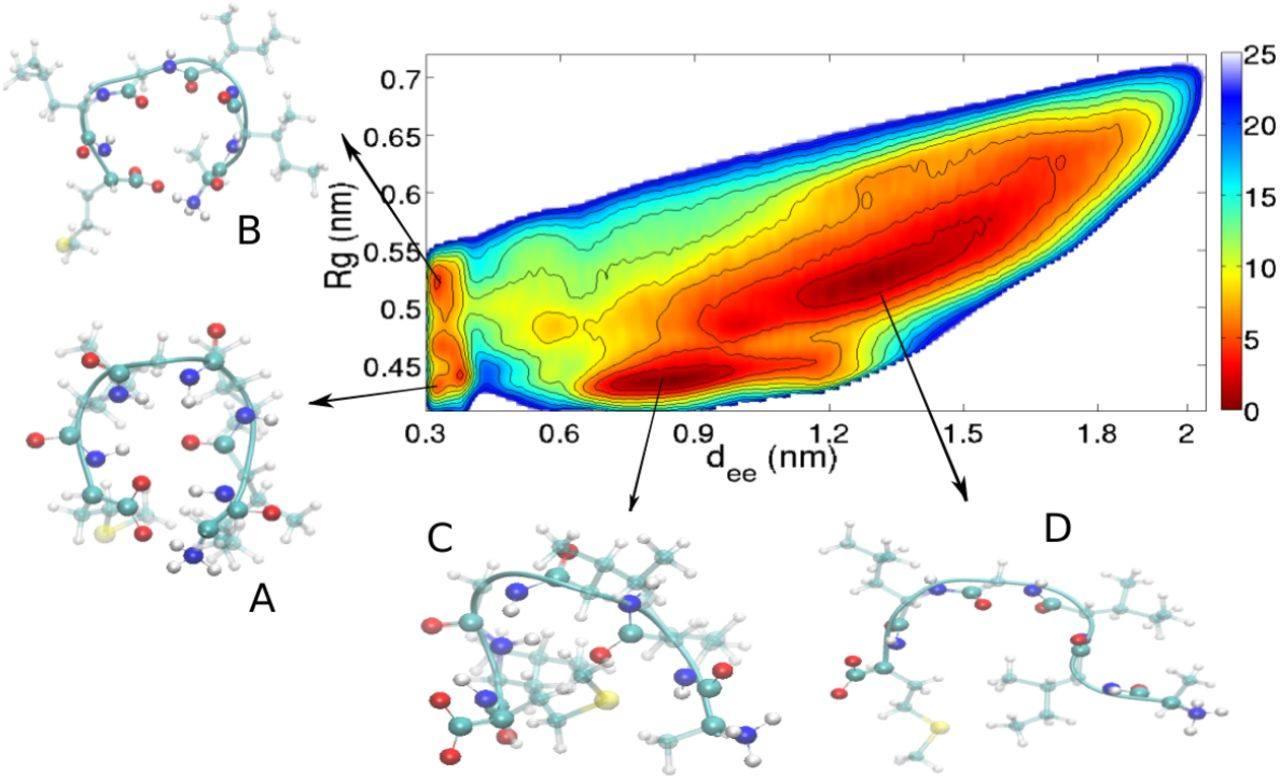Hydrogen Bond Networks and Hydrophobic Effects in the