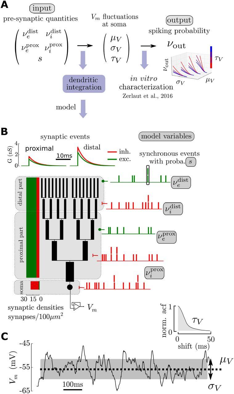 Heterogeneous Firing Responses Predict Diverse Couplings to