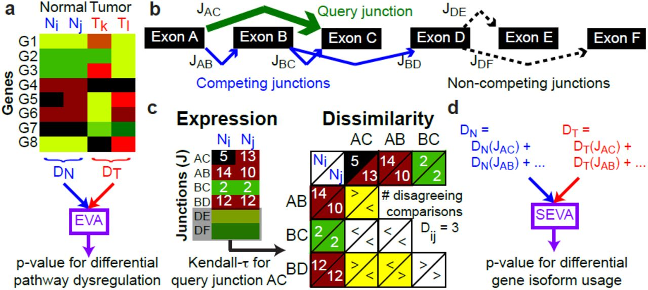 Splice Expression Variation Analysis (SEVA) for Differential
