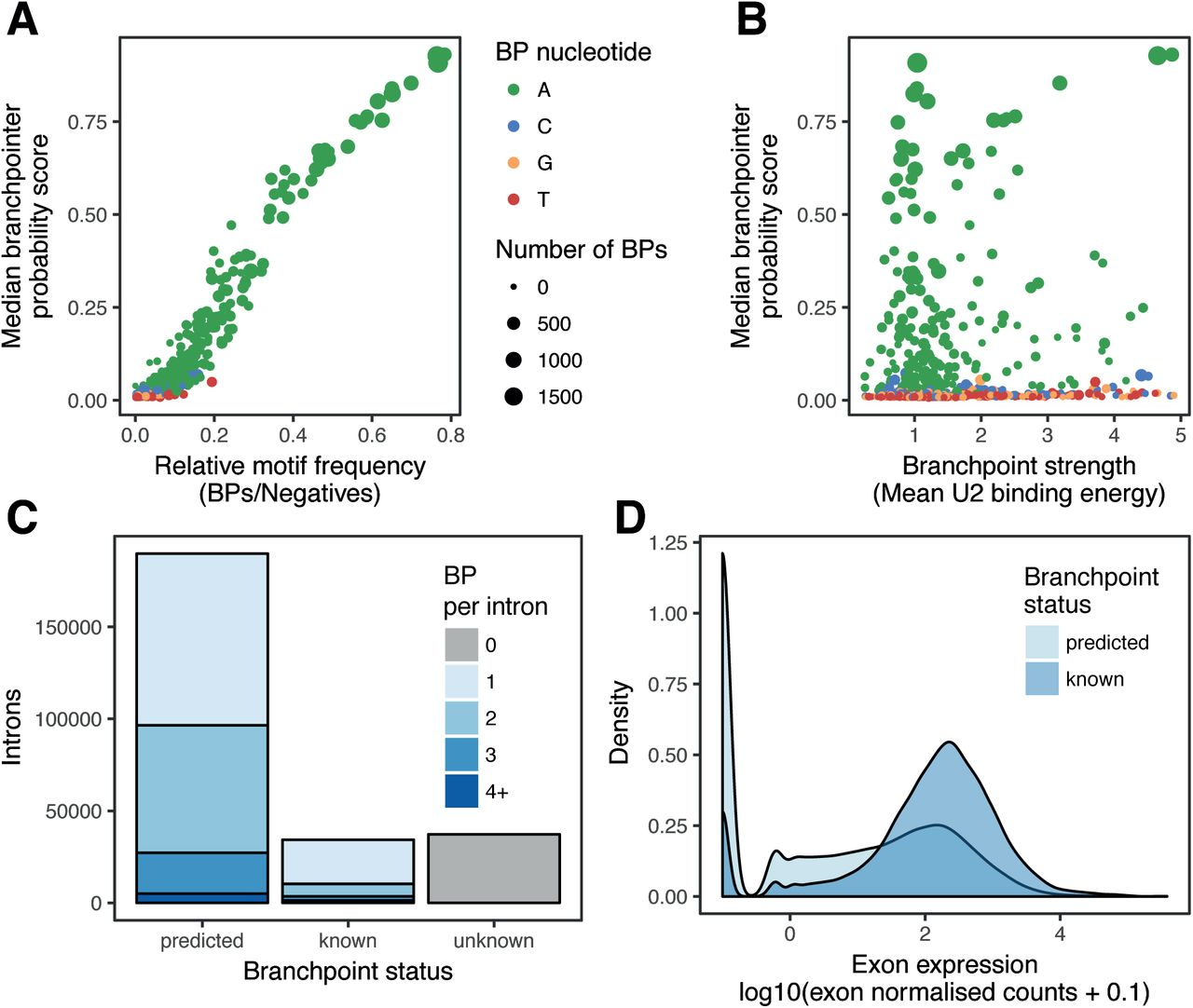 Machine-learning annotation of human splicing branchpoints