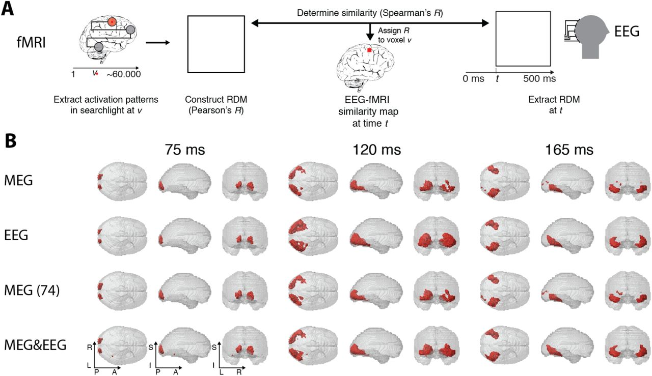 Multivariate pattern analysis of MEG and EEG: a comparison of