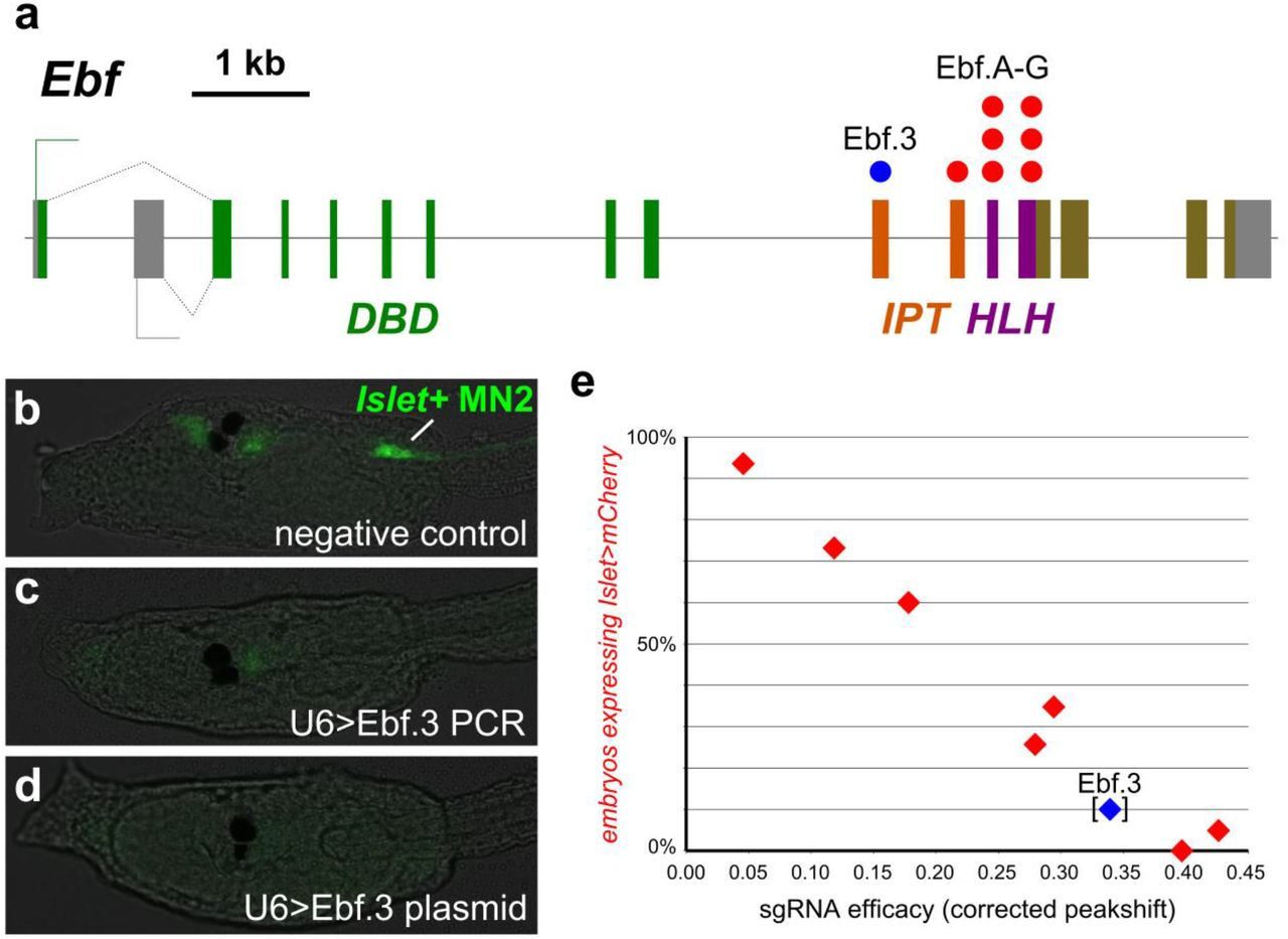 Evaluation and rational design of guide RNAs for efficient