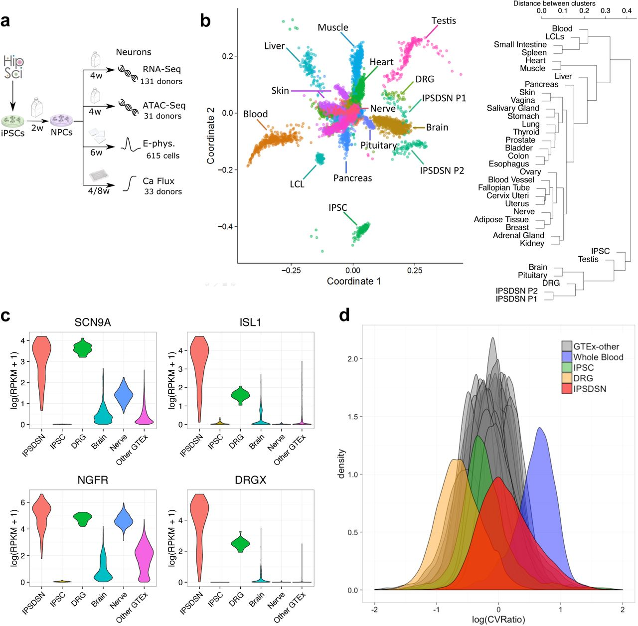e7cd9729c3943 Molecular and functional variation in iPSC-derived sensory neurons ...