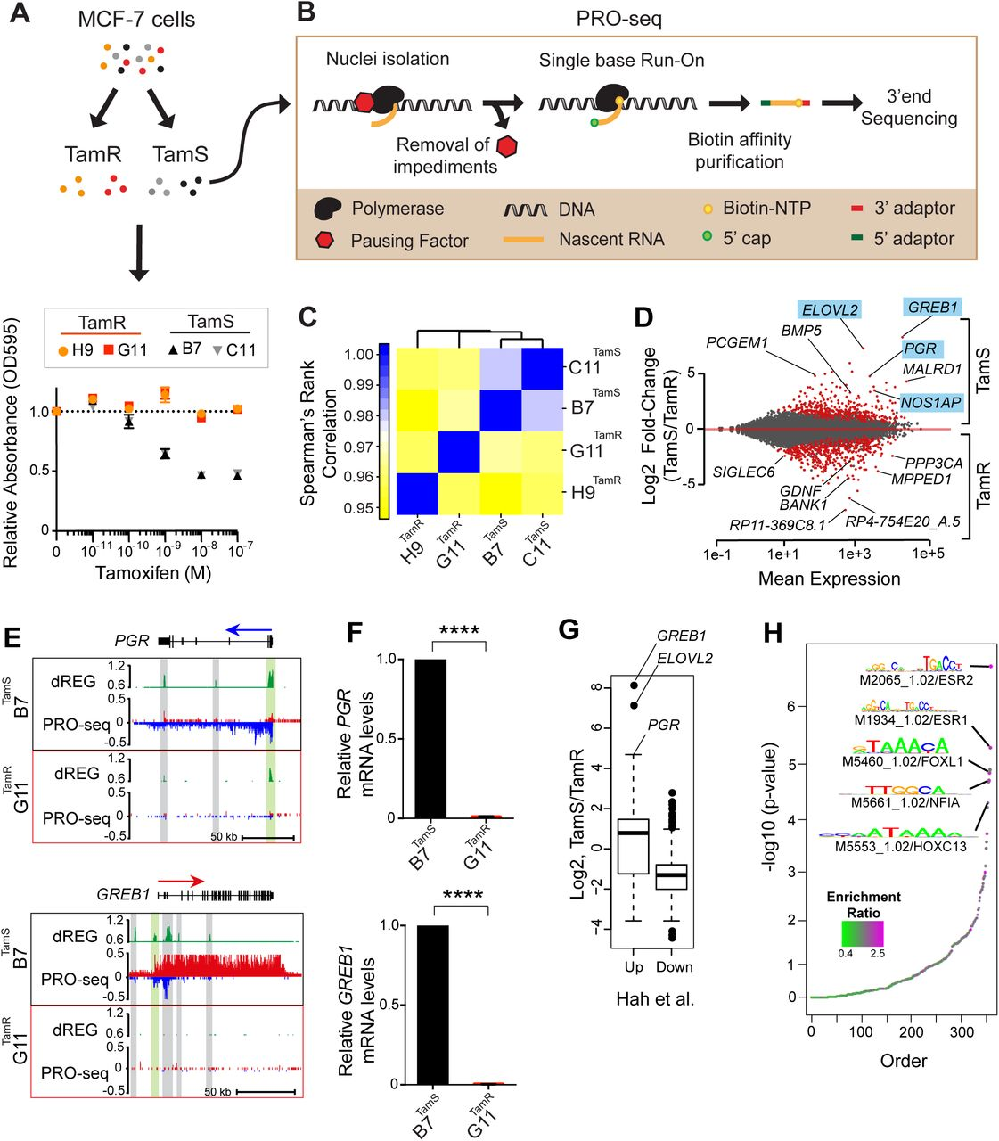 RET Ligands Mediate Endocrine Sensitivity via a Bi-stable Feedback