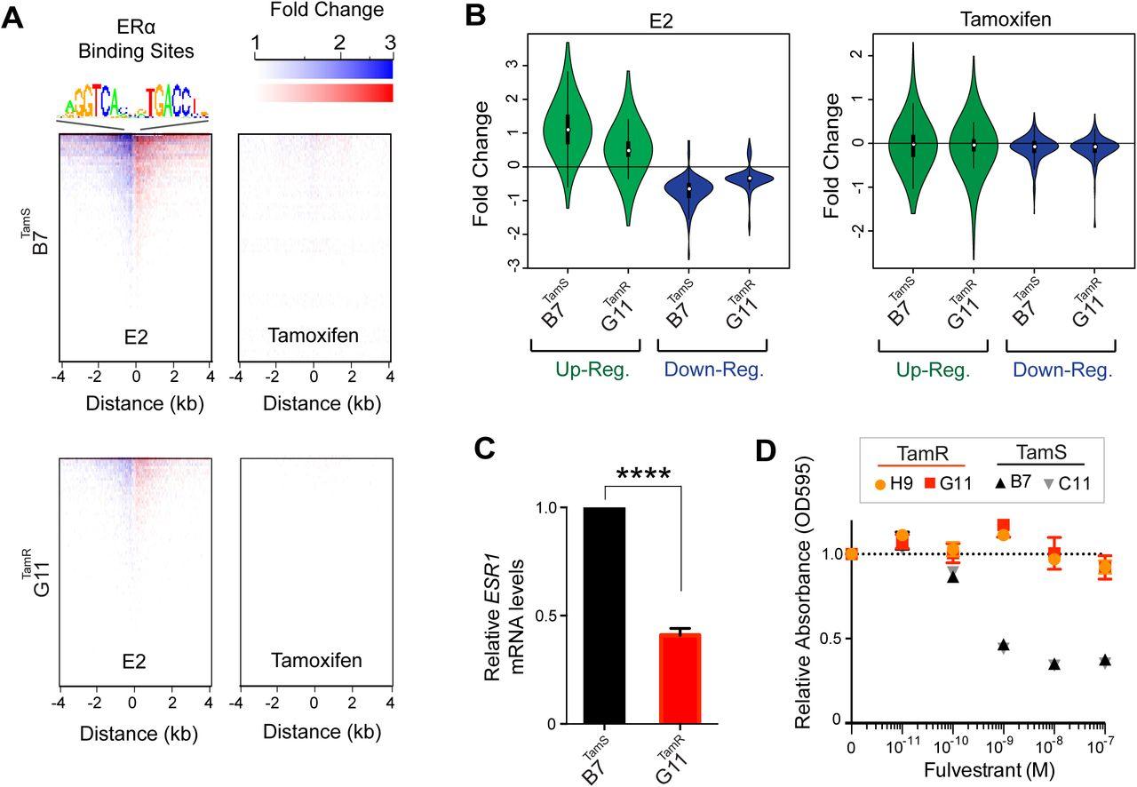 RET Ligands Mediate Endocrine Sensitivity via a Bi-stable