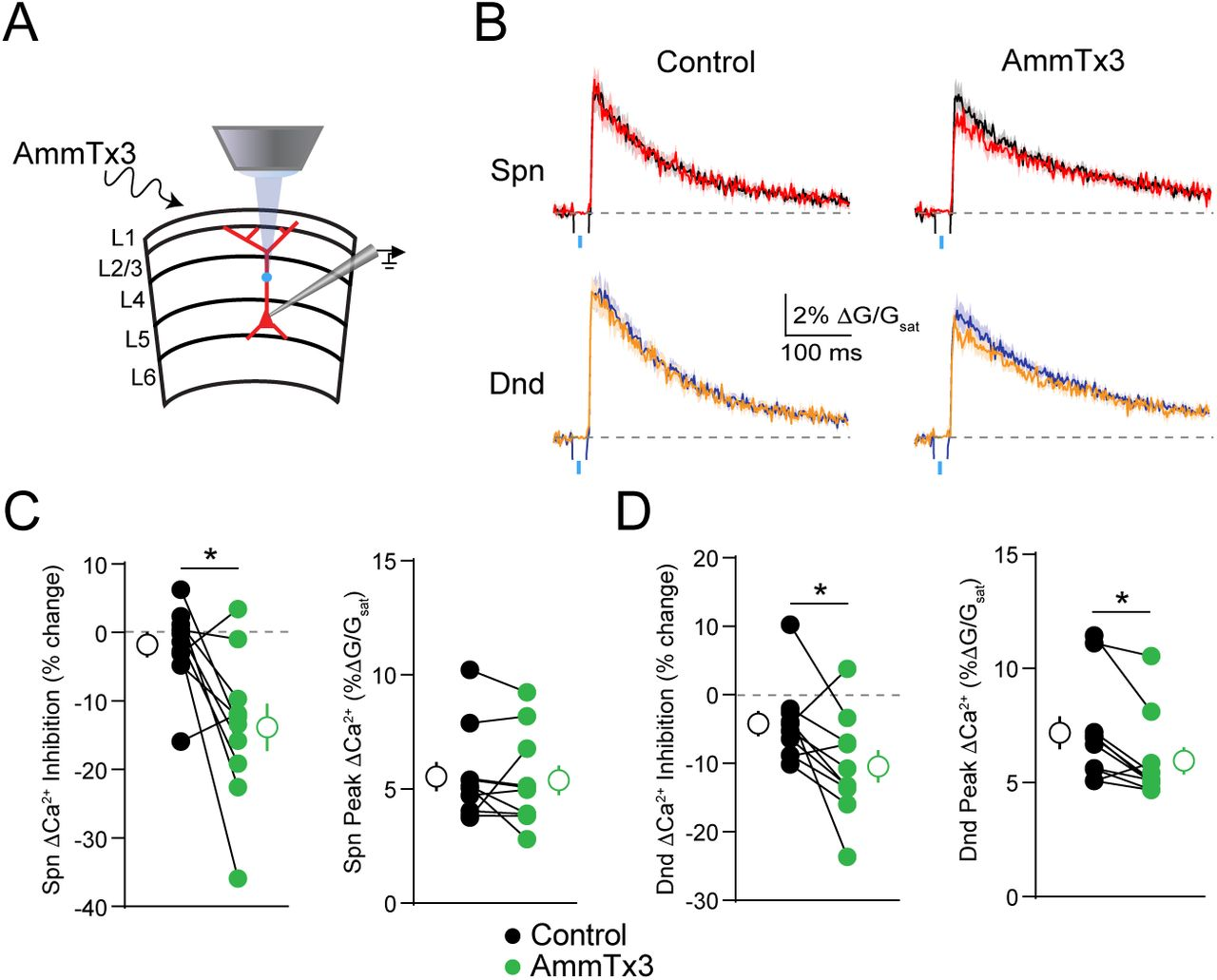 Potassium channels contribute to activity-dependent scaling