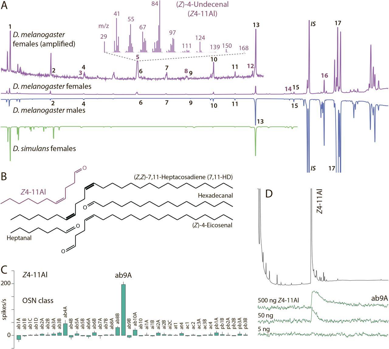 The Drosophila melanogaster pheromone Z4-11Al is encoded