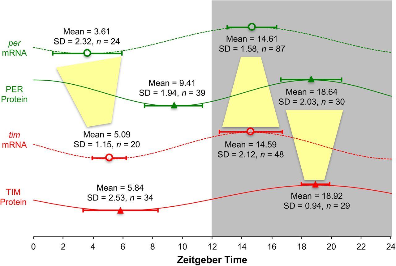 Diagram Furthermore Equalizer Car Audio Wiring Diagram In Addition Dj