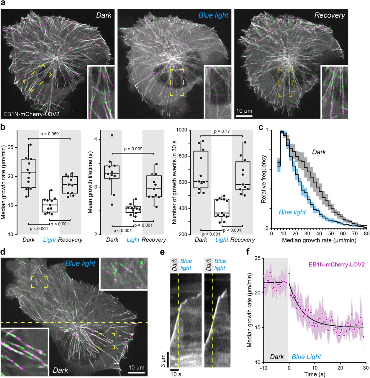 Local Control of Intracellular Microtubule Dynamics by End