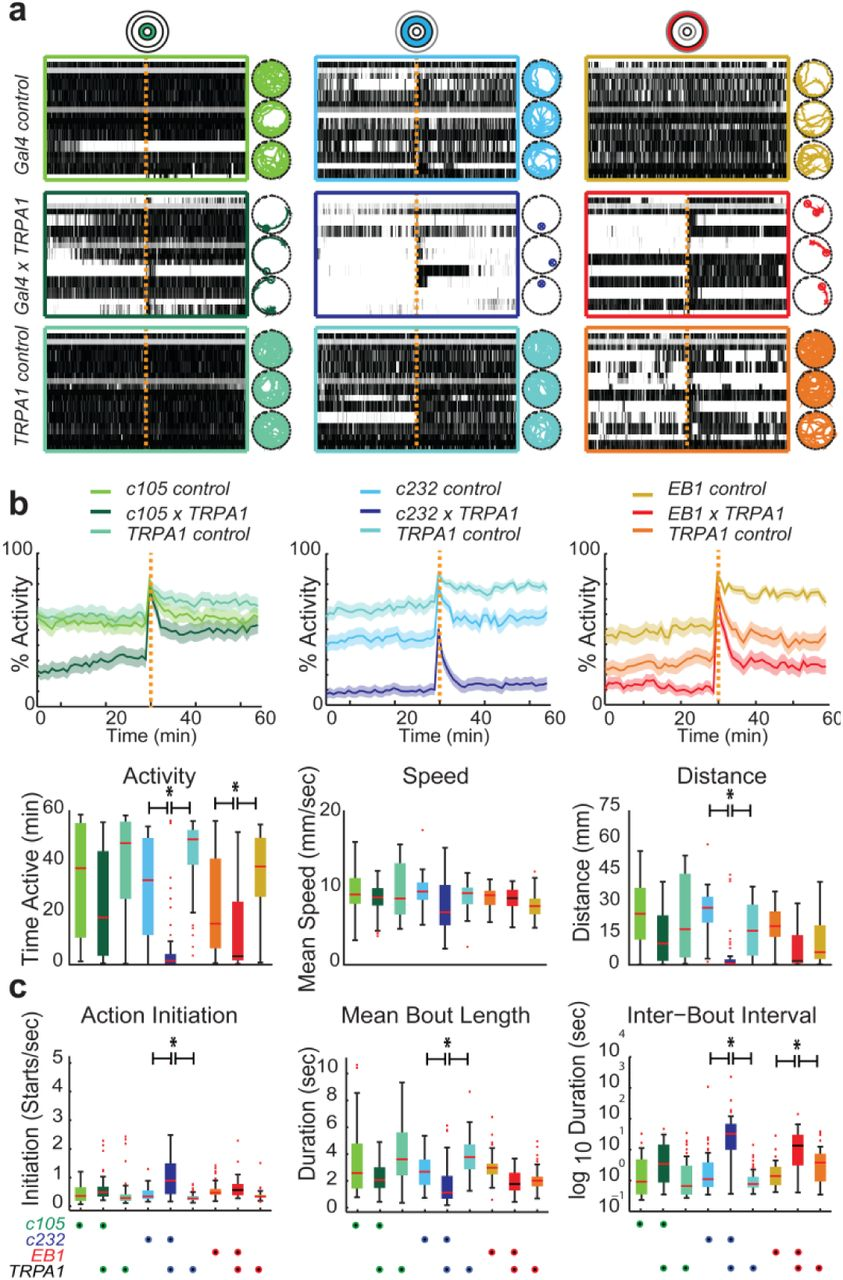 A lineage-related reciprocal inhibition circuitry for