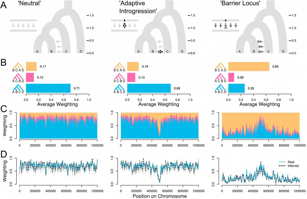 b3714979ce6a Exploring evolutionary relationships across the genome using ...