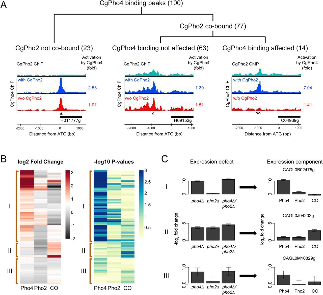 Evolution of Reduced Co-Activator Dependence Led to Target Expansion