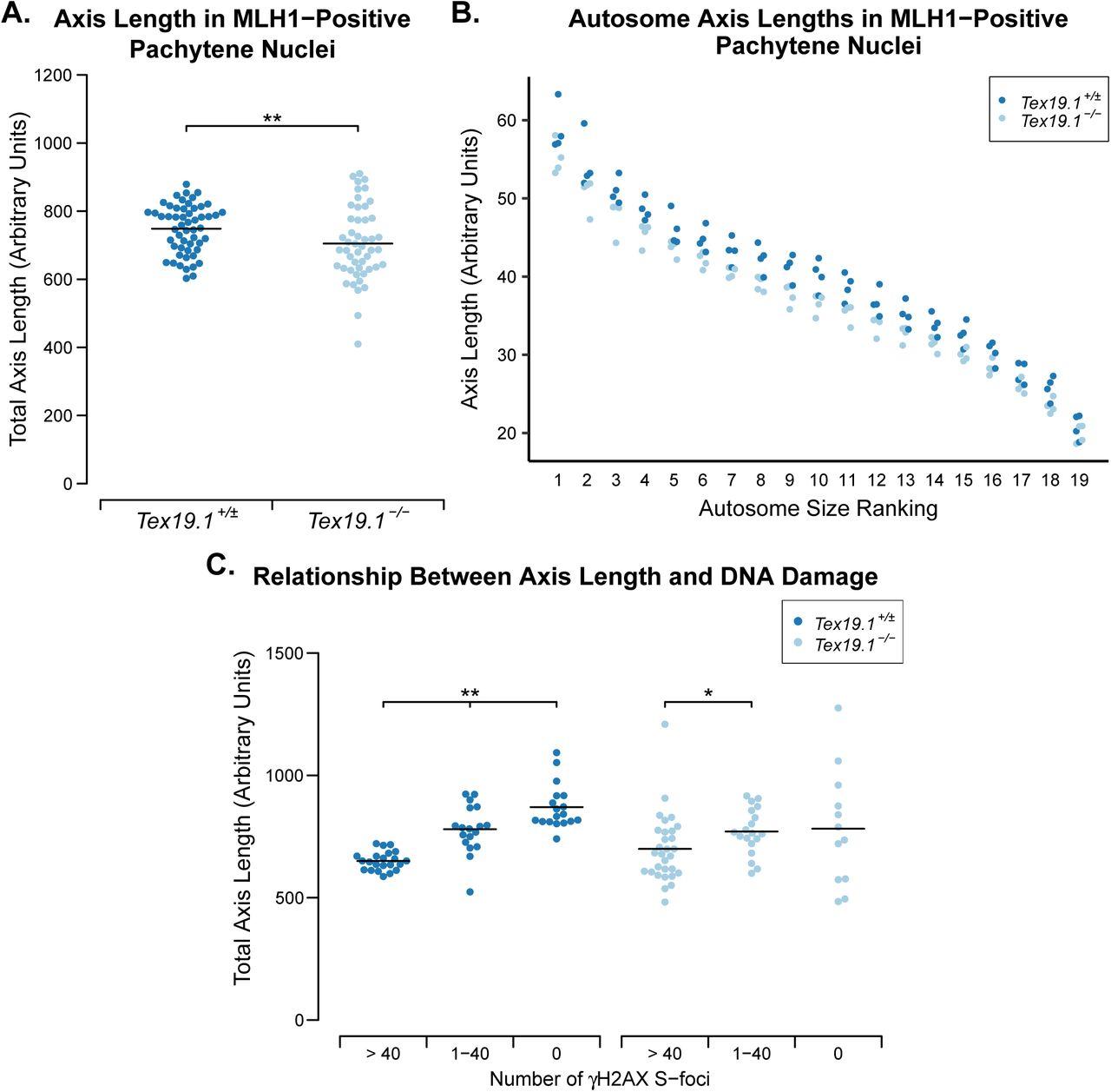 Defects in Meiotic Recombination Delay Progression Through