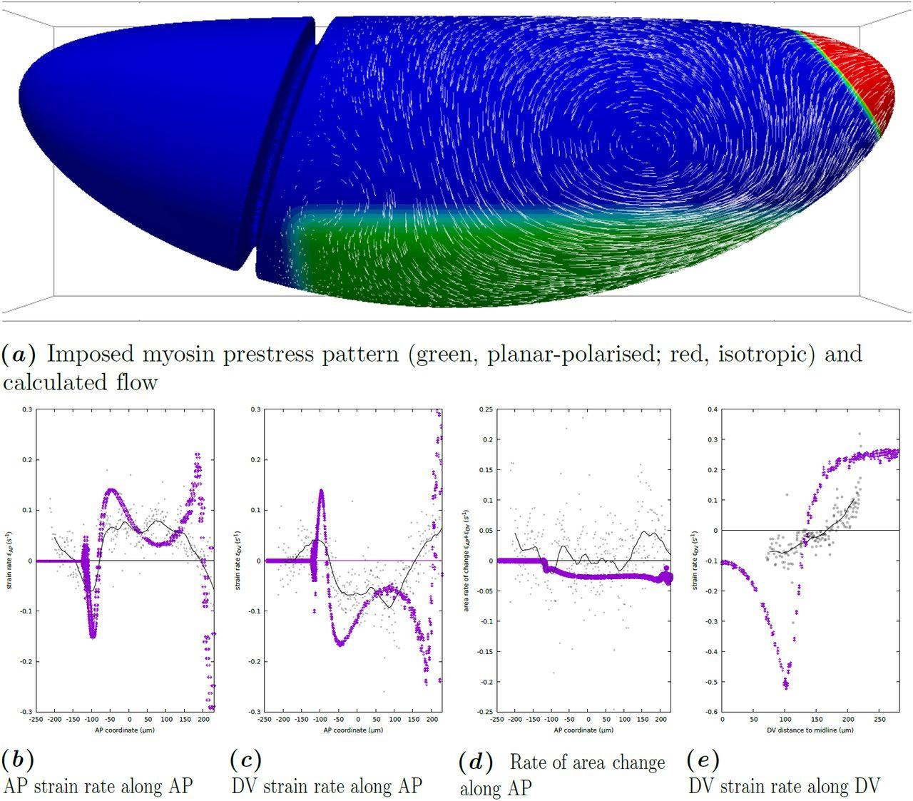 Geometry Can Provide Long-Range Mechanical Guidance for