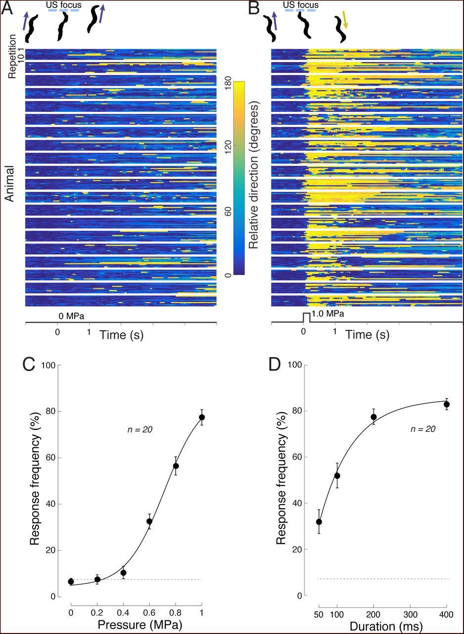 Ultrasound elicits behavioral responses through mechanical