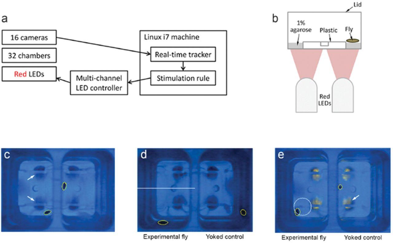 SkinnerTrax: high-throughput behavior-dependent optogenetic