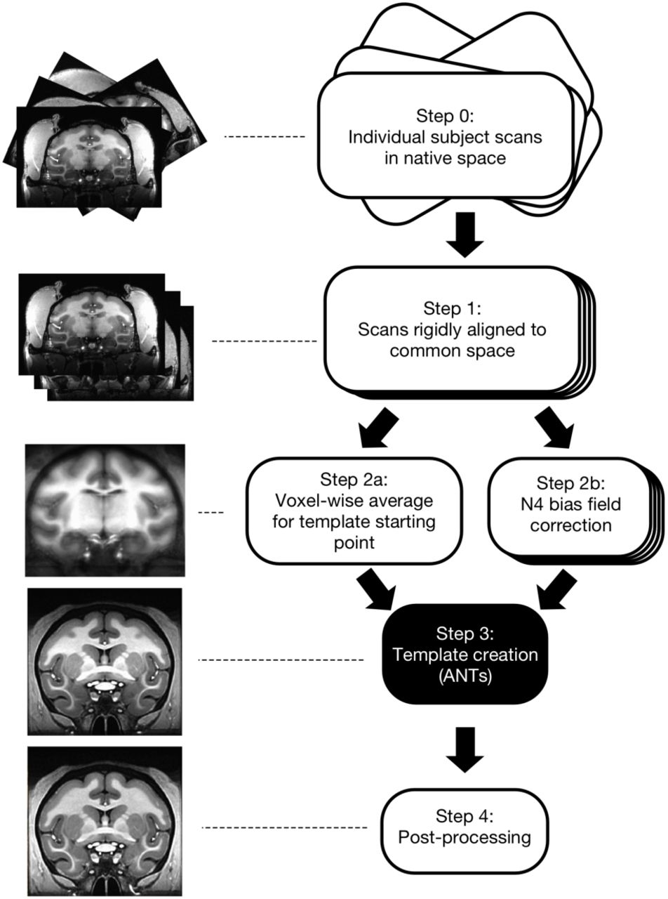 A Population Mri Brain Template And Analysis Tools For The Macaque