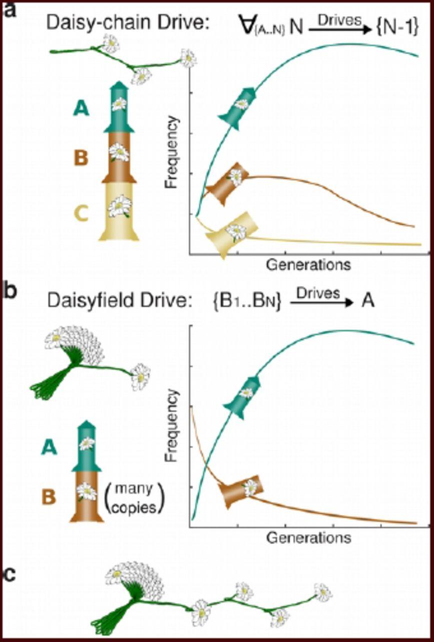 Daisy Chain Diagram
