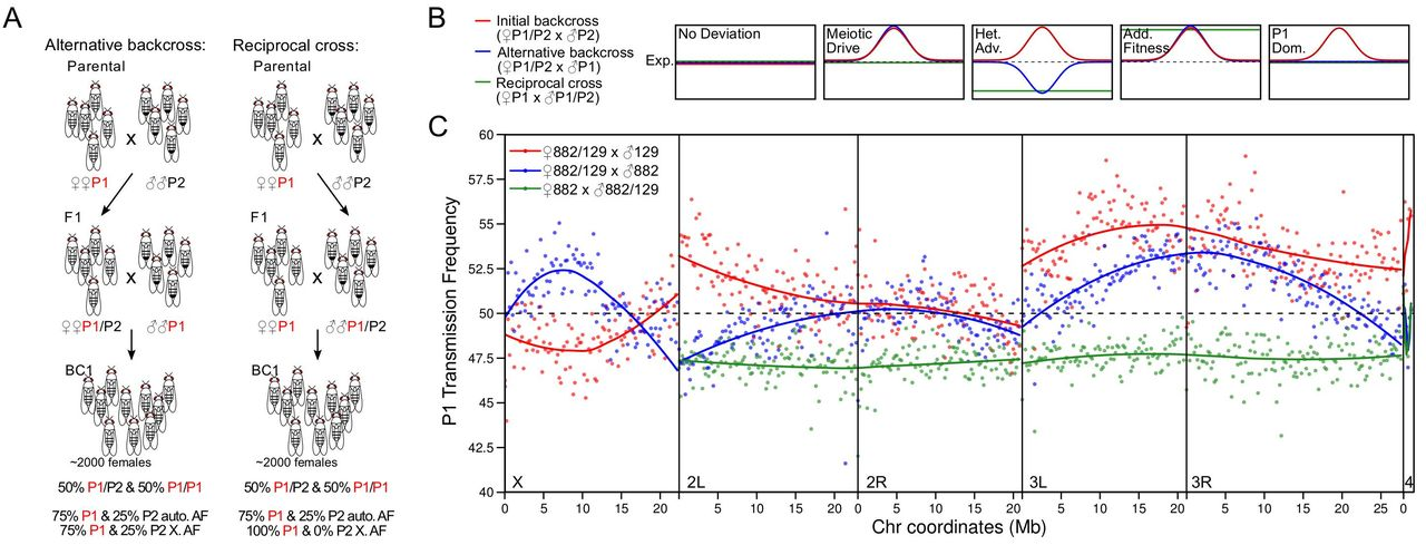 A pooled sequencing approach identifies a candidate meiotic driver
