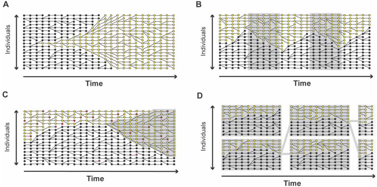 Variability in fitness effects and the limitations of lineage