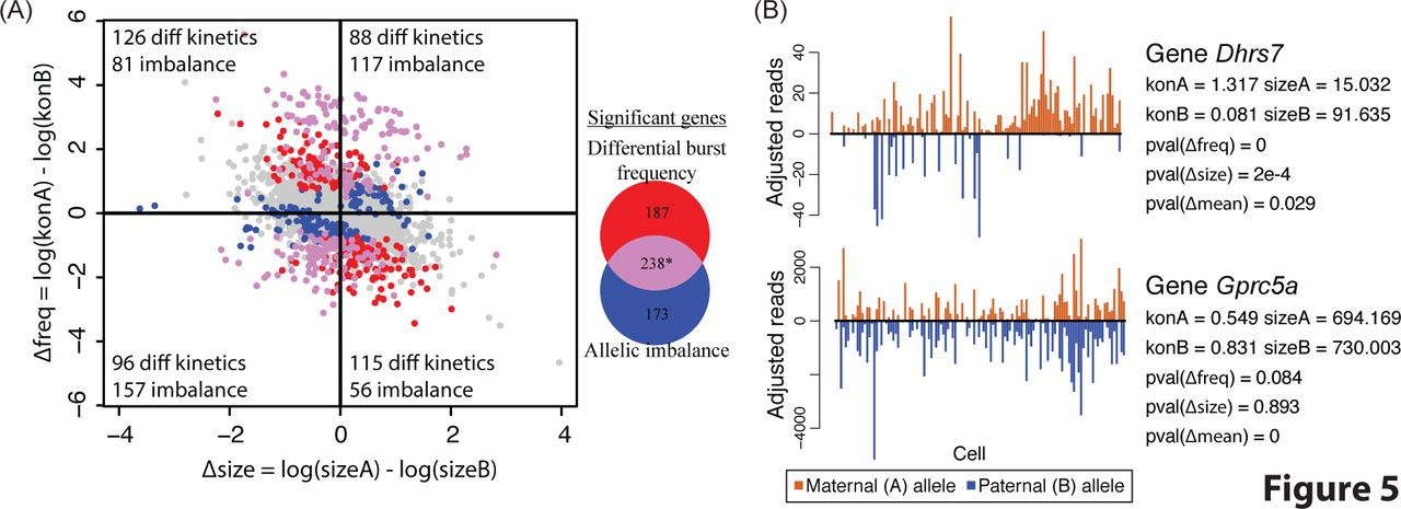 Modeling allele-specific gene expression by single-cell RNA