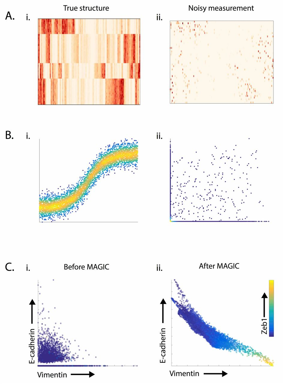 MAGIC: A diffusion-based imputation method reveals gene-gene