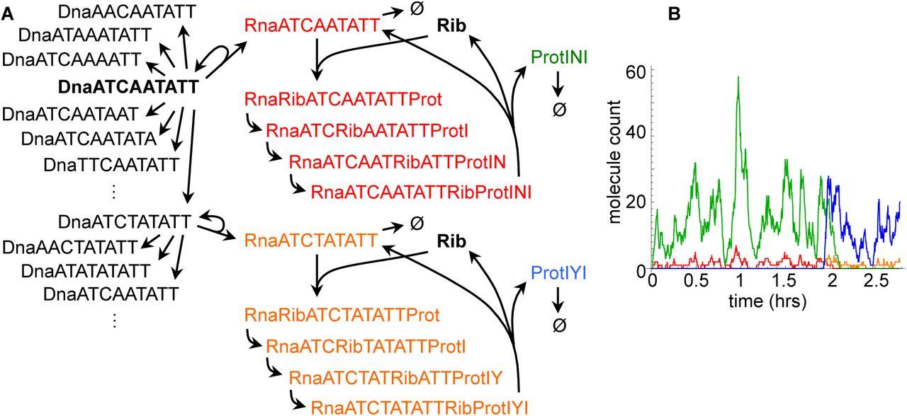 Rule-based modeling using wildcards   bioRxiv