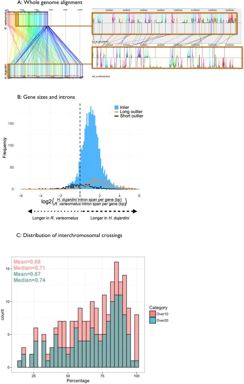 Comparative genomics of the tardigrades Hypsibius dujardini and
