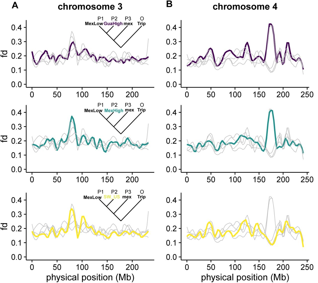The interplay of demography and selection during maize domestication