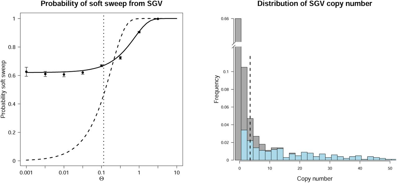Soft sweeps and beyond: Understanding the patterns and probabilities
