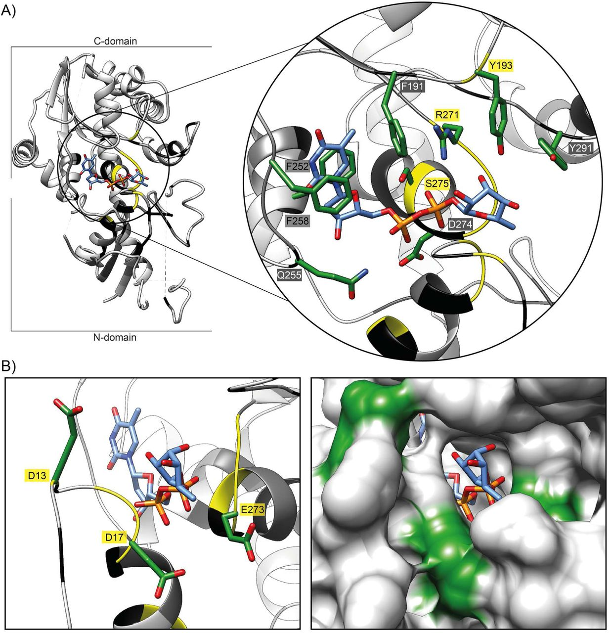 Structural basis for EarP-mediated arginine glycosylation of