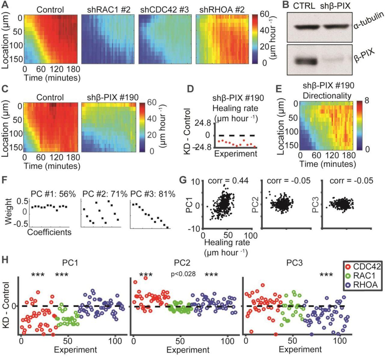 Diverse roles of guanine nucleotide exchange factors in regulating