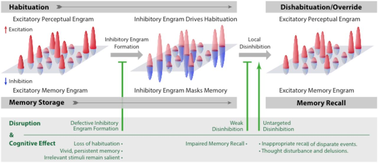 Inhibitory engrams in perception and memory | bioRxiv