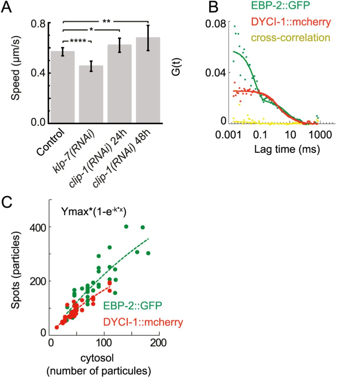 Dynamics of dynein at microtubule plus-ends and the cortex