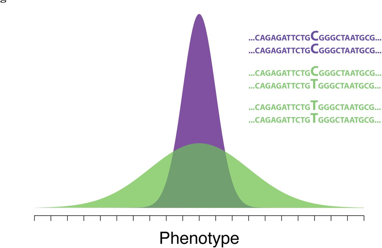 On the relationship between epistasis and genetic variance
