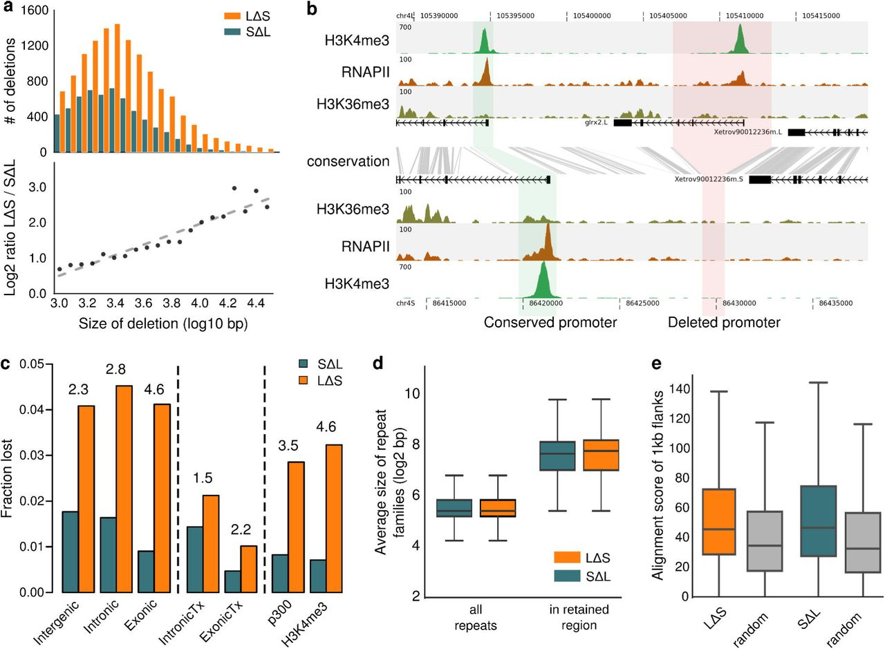 Regulatory remodeling in the allo-tetraploid frog Xenopus laevis