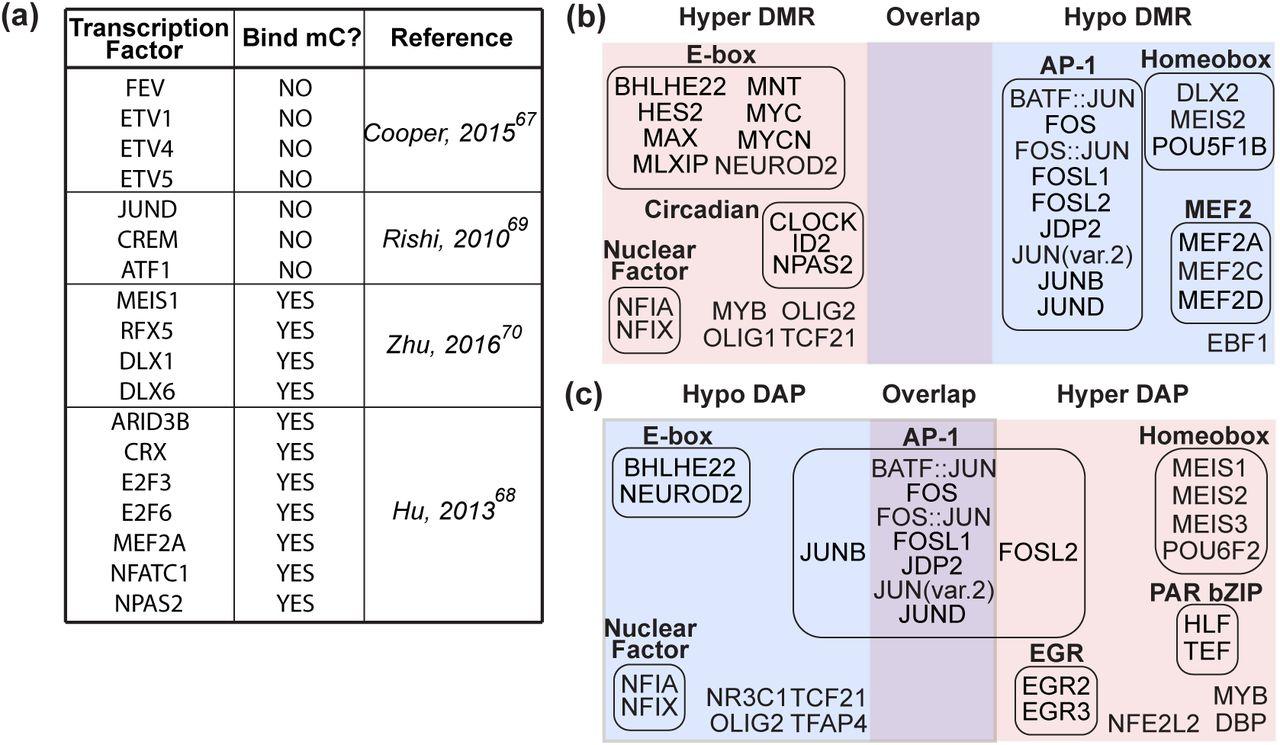 Neuronal brain region-specific DNA methylation and chromatin