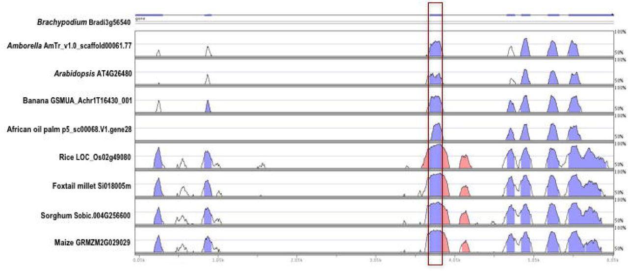 Evolutionarily Conserved Alternative Splicing Across