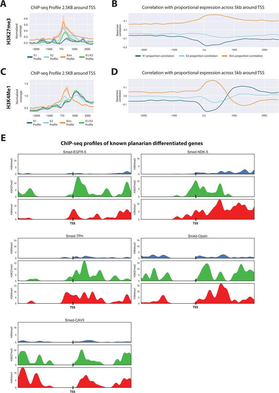 Epigenetic analyses of the planarian genome reveals
