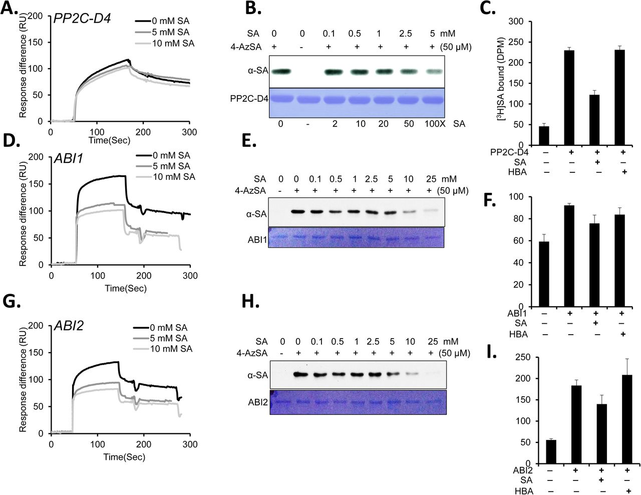 Members of the abscisic acid co-receptor PP2C protein family mediate
