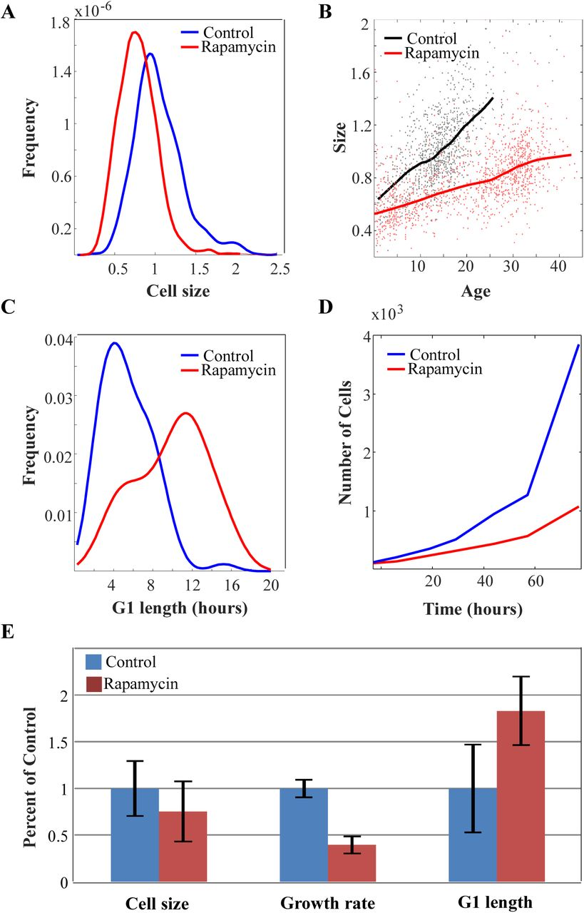 Cell size sensing in animal cells coordinates anabolic