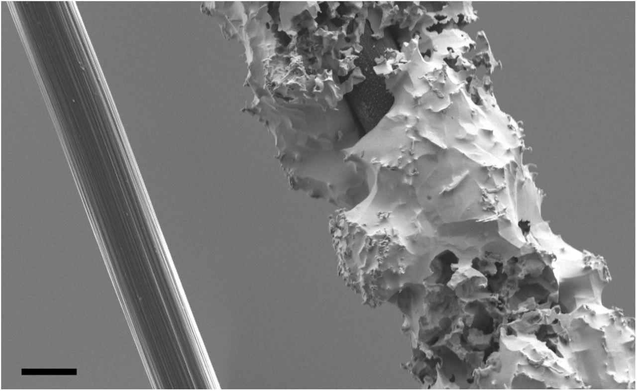 Carbon Fiber on Polyimide Ultra-Microelectrodes | bioRxiv